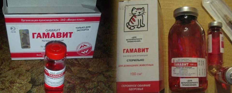 Гамавит для кошек: инструкция по применению, цена, отзывы о препарате