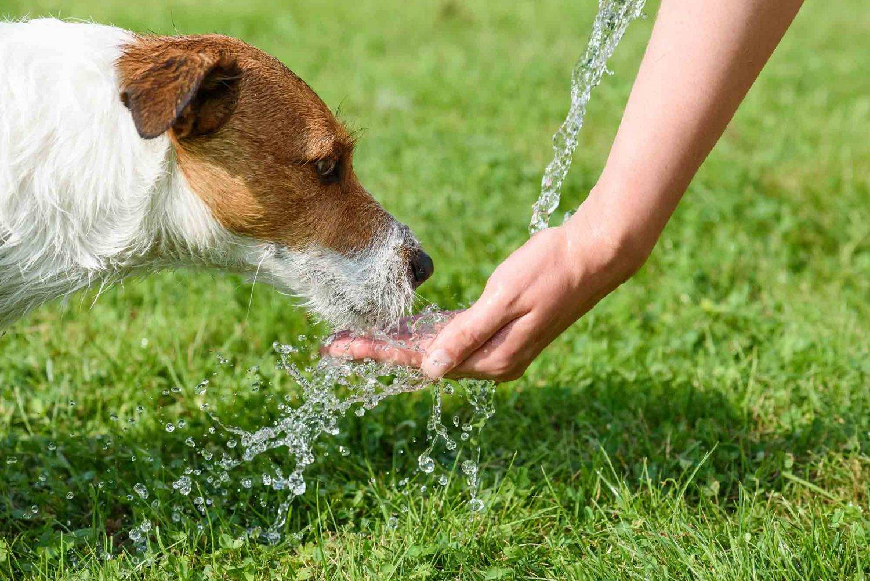 Как помочь собаке в жару: советы и рекомендации опытных владельцев