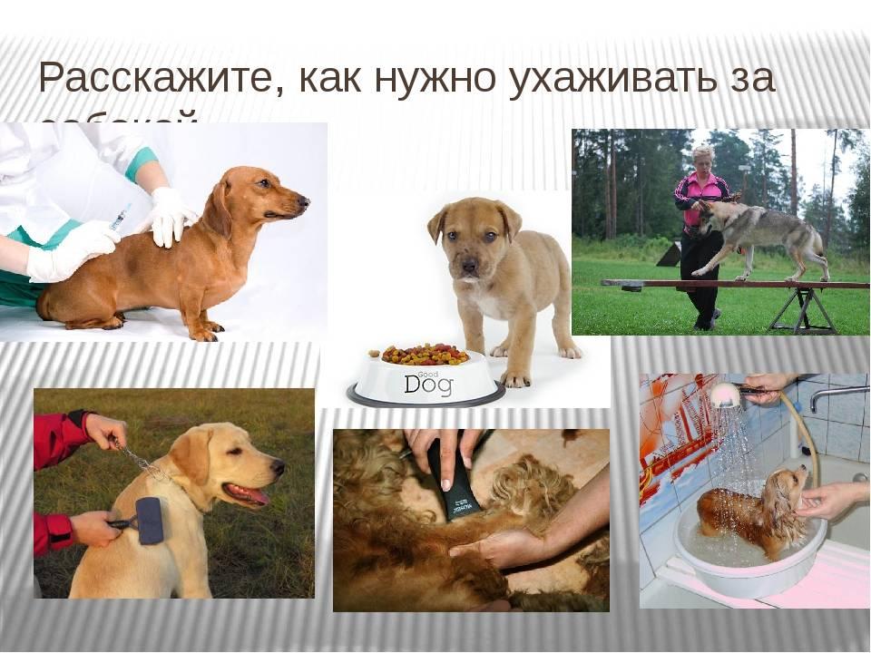 Как нужно правильно ухаживать за собакой в домашних условиях