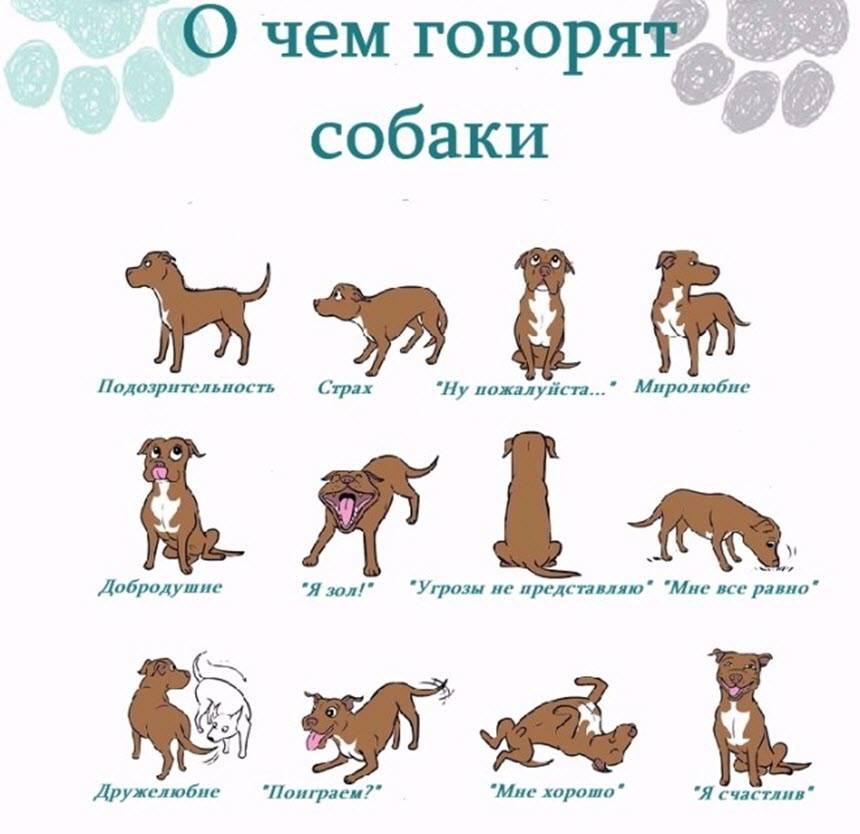 Собачки для знаков зодиака. - сайт smallstars!