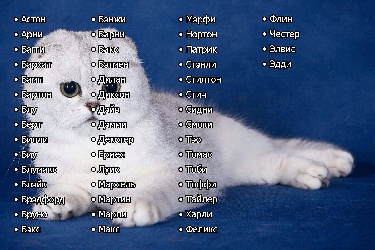Имена для кошек-девочек: редкие и красивые кошачьи клички. как можно назвать котенка? необычные и легкие женские имена