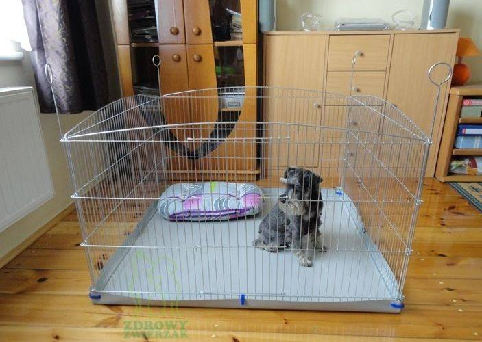 Вольеры для щенков в квартиру: как выбрать и сделать своими руками?
