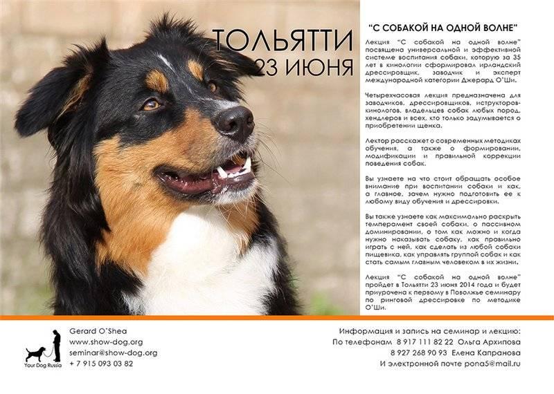 Анатолийская овчарка: описание породы,уход,содержание,рацион,фото,видео