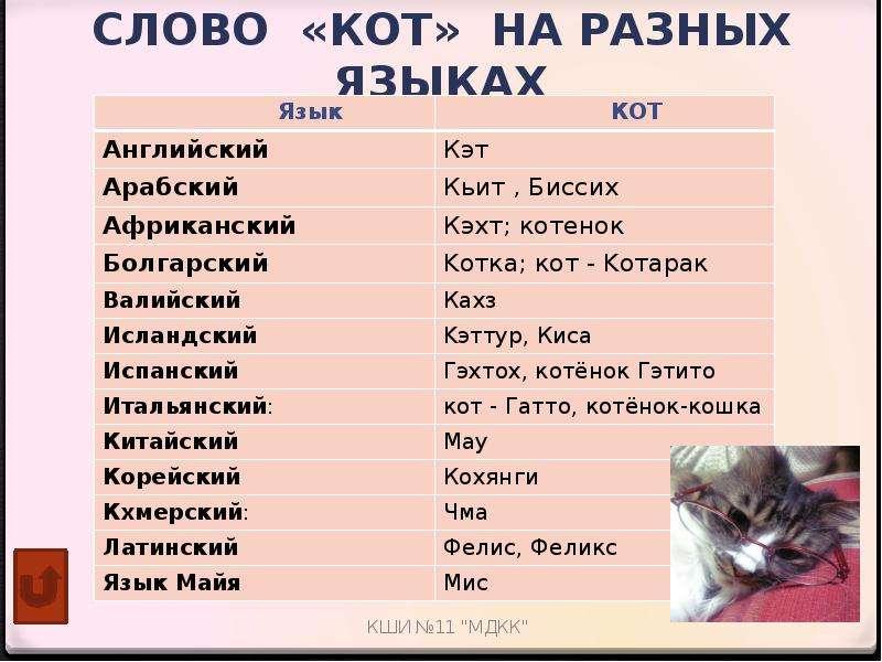 Как назвать кота или кошку?