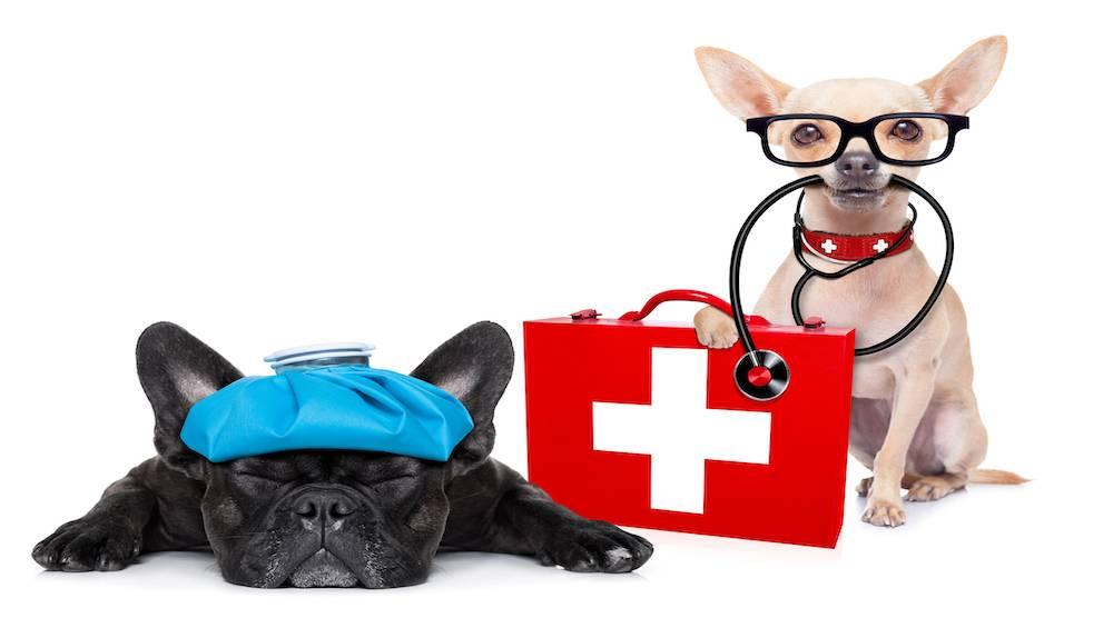 Ветеринары рассказали, как защитить питомца от перегрева во время путешествий