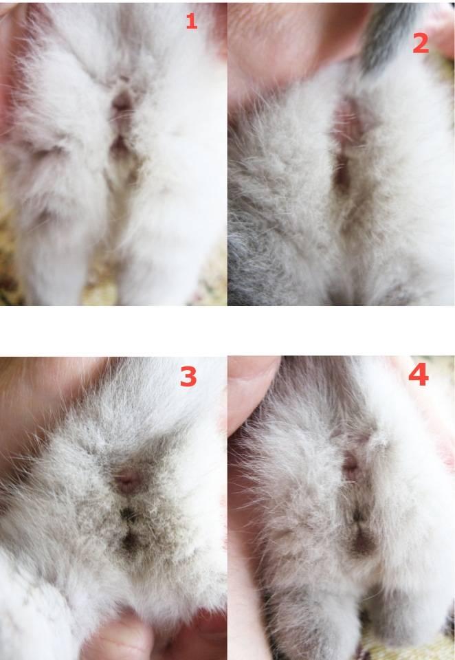 Мы научим вас, как определить пол котенка