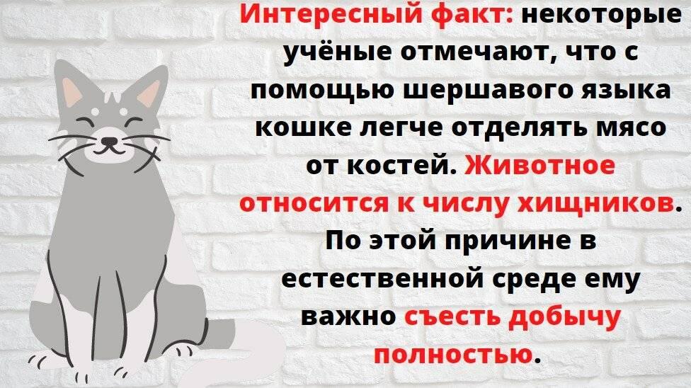 Язык кошки