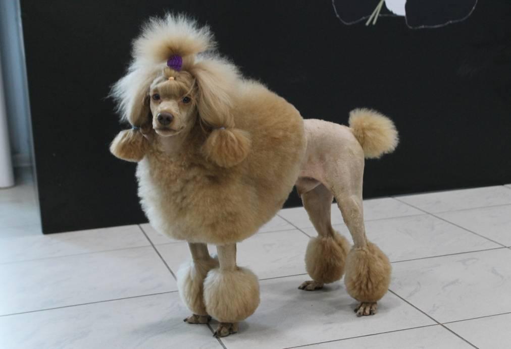 Стрижка собак на дому: особенности груминга йорков
