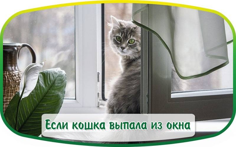 Кошка выпала из окна: что делать, первая помощь, как сохранить жизнь питомца, возможные последствия
