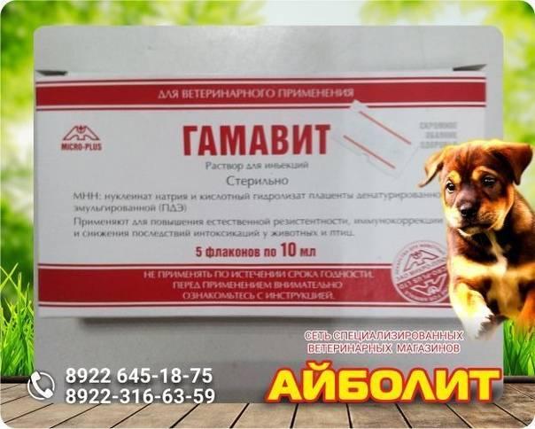 Витамины для собак и кошек: зачем нужны и как выбрать? - сибирский медицинский портал