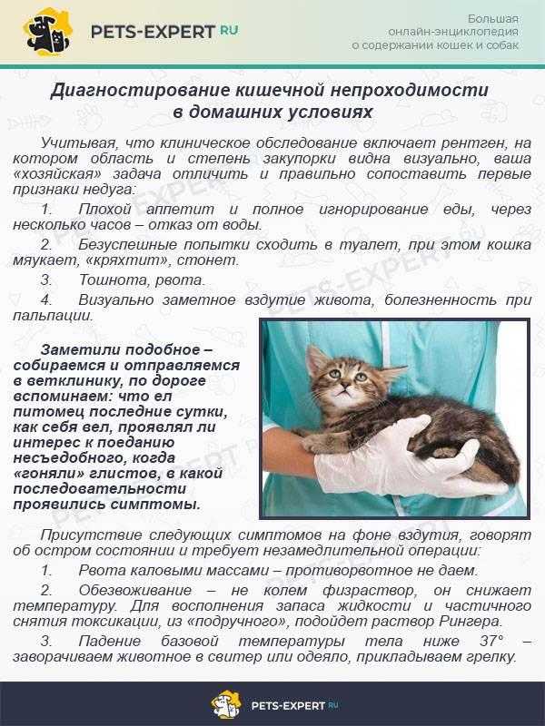 Кишечная инфекция у новорожденного : причины, симптомы, диагностика, лечение   компетентно о здоровье на ilive