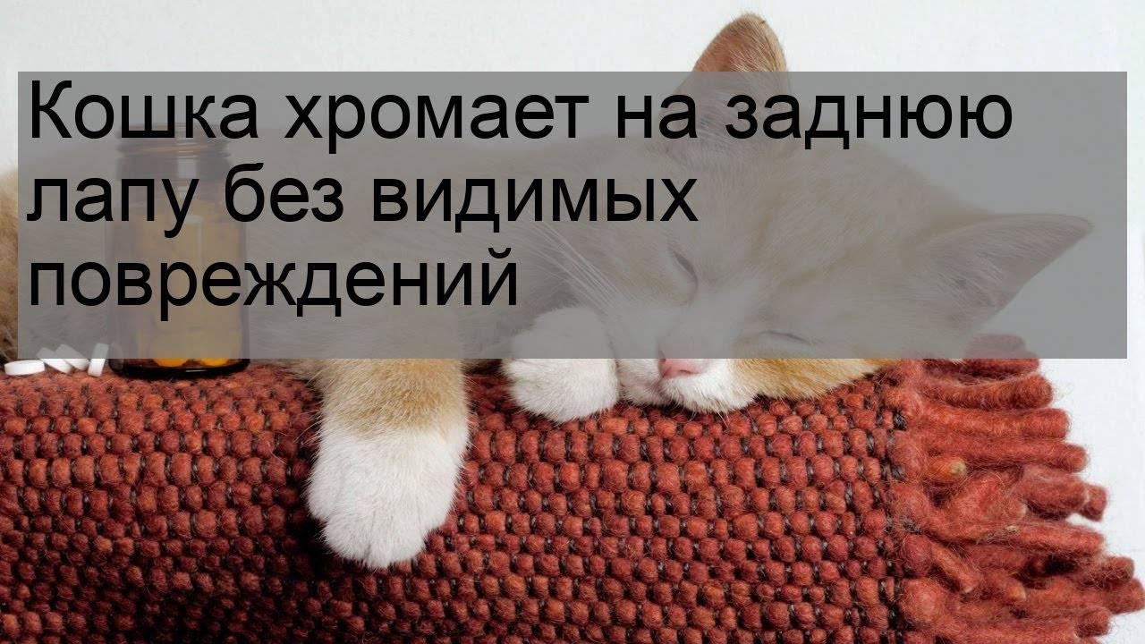 Признаки боли у кошек | ветеринарная клиника «соколиная гора»