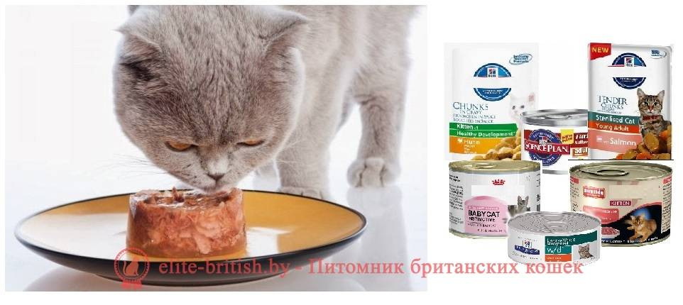 Лучший корм для британского котенка