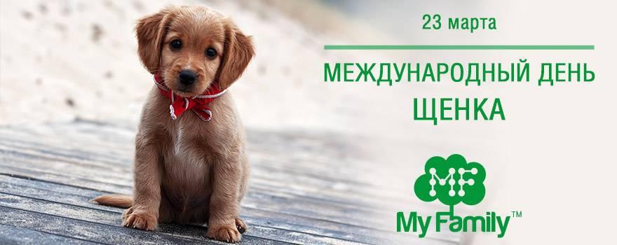 Международный день ветеринарного врача в 2021 году: какого числа, дата и история праздника