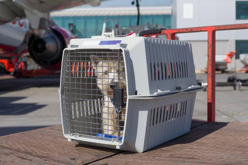 Перевозка животных в самолете – блог купибилет
