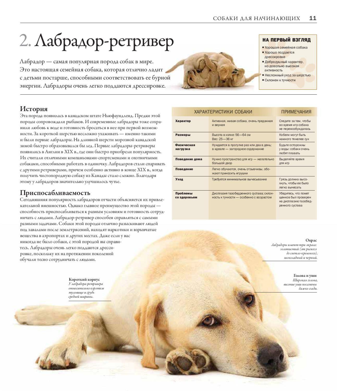 Ротвейлер собака. описание, особенности, уход и цена ротвейлера | sobakagav.ru