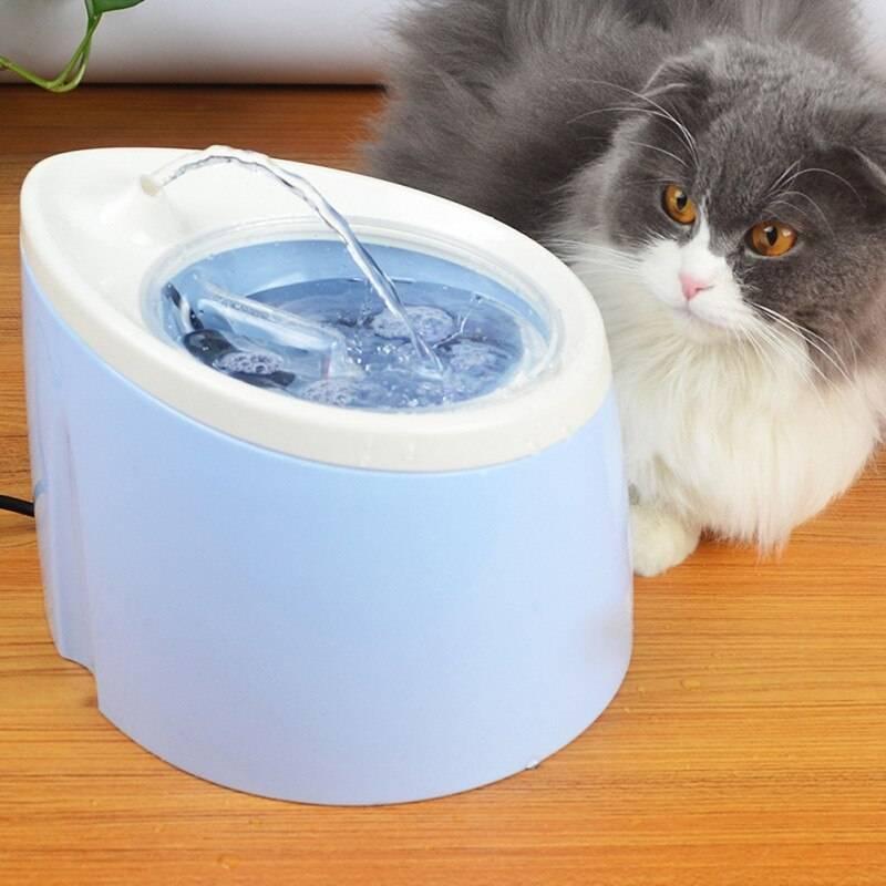 Автоматическая поилка для кошек: какую выбрать