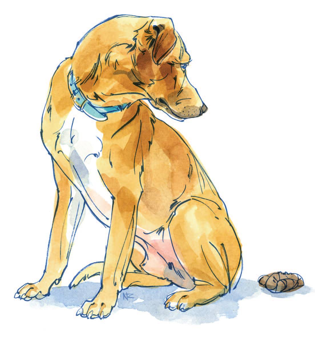 ᐉ собака не ходит в туалет по большому – запор у таксы что делать - zoomanji.ru