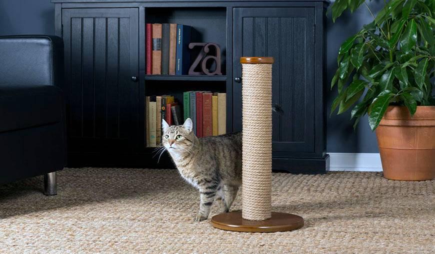Как отучить кота драть мебель, мягкую, кожаную, средства и методы
