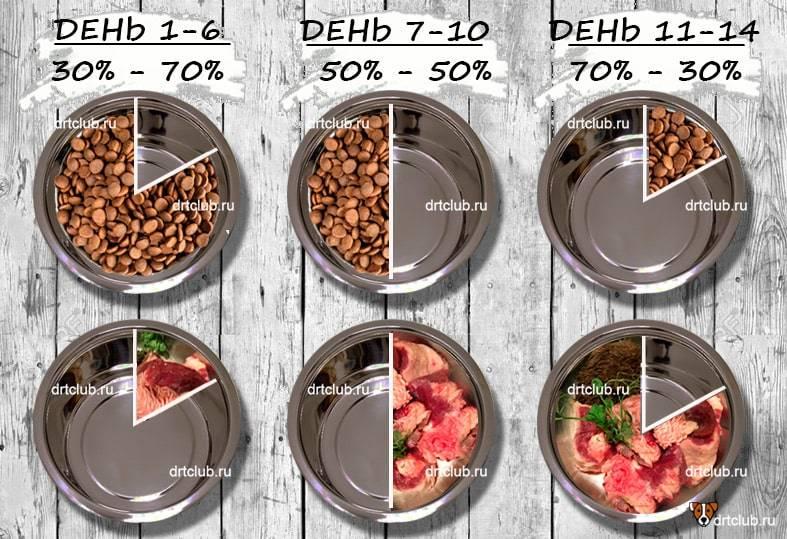 Правила выбора сухого корма для собаки - рекомендации специалиста