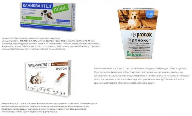 У собаки понос с кровью: причины, лечение в домашних условиях