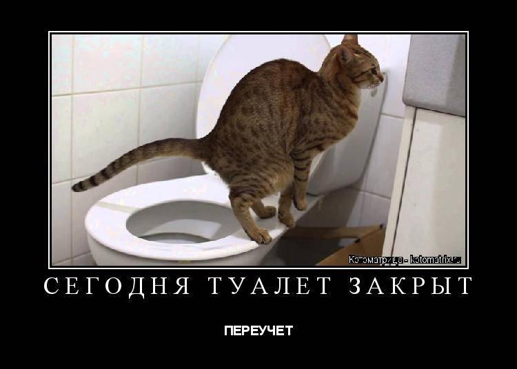 Котенок ездит попой по полу после туалета