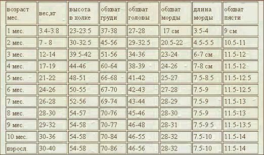 Щенки лабрадора в 2 месяца: характеристики и содержание