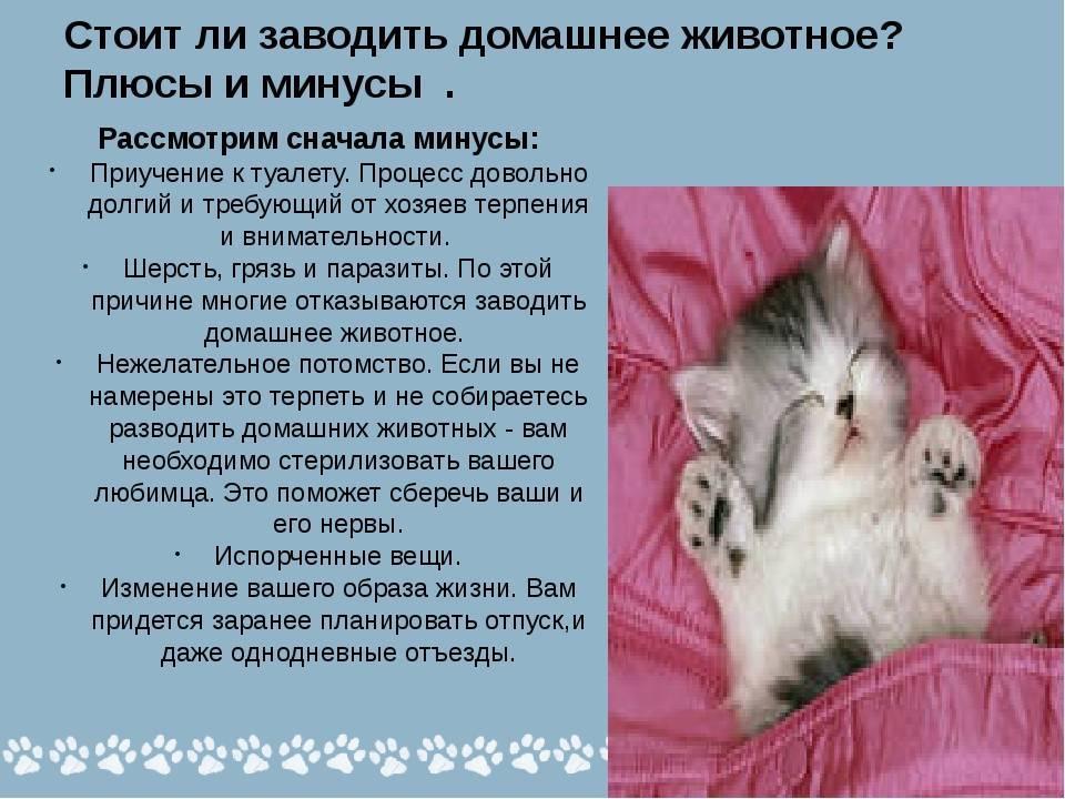 Кого завести — кошку или собаку, какое животное лучше держать в доме: щенок или котёнок — что будет лучше для вас