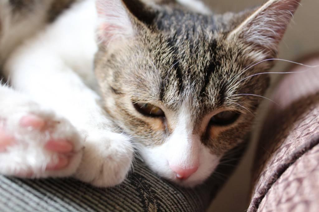 Кошка вялая, много спит: норма или патология? кошка мало ест и много спит, что делать?