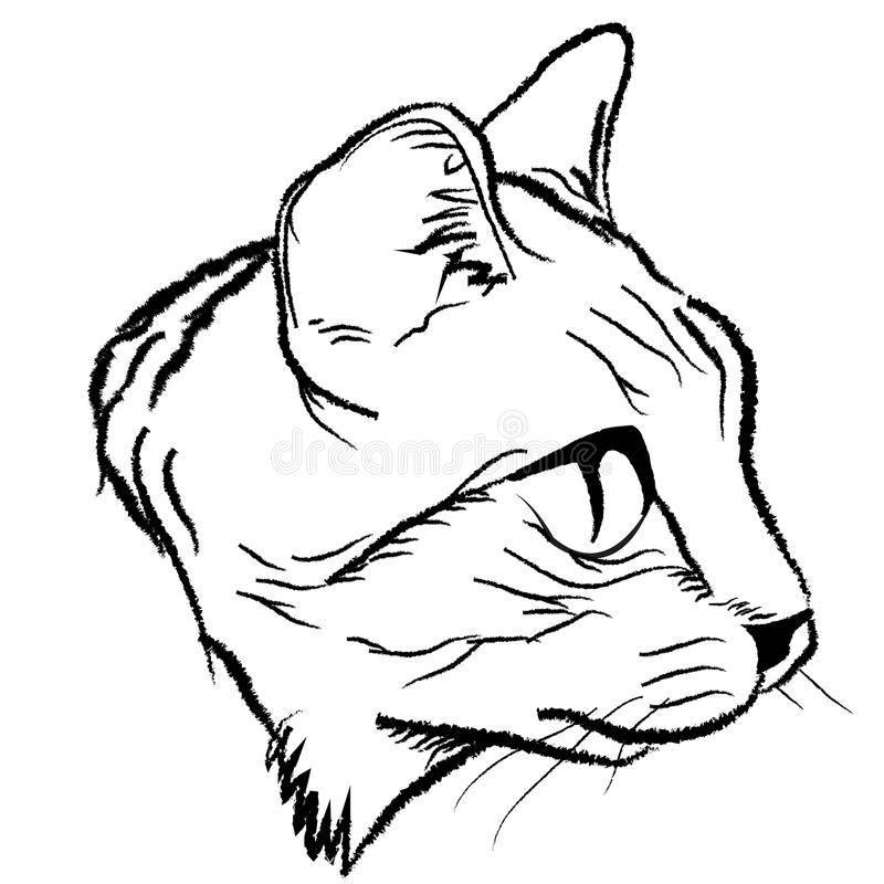 Как нарисовать лицо кошки поэтапно – рисуем мордочку кота легко и просто