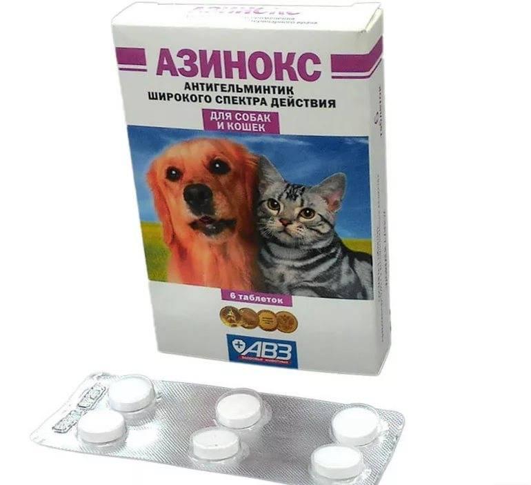 Имунофан для кошек: инструкция по применению, профилактика и лечение препаратом, противопоказания, цена, отзывы, аналоги