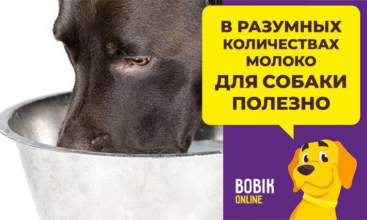Можно ли собакам молоко, можно ли щенкам давать коровье молоко