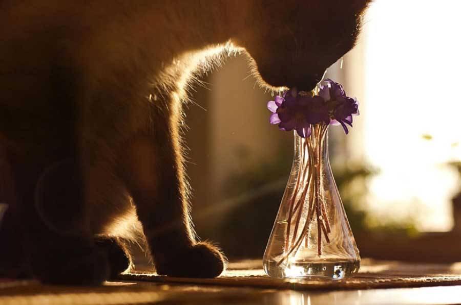 Какой запах кошки не любят больше всего, самые популярные ароматы