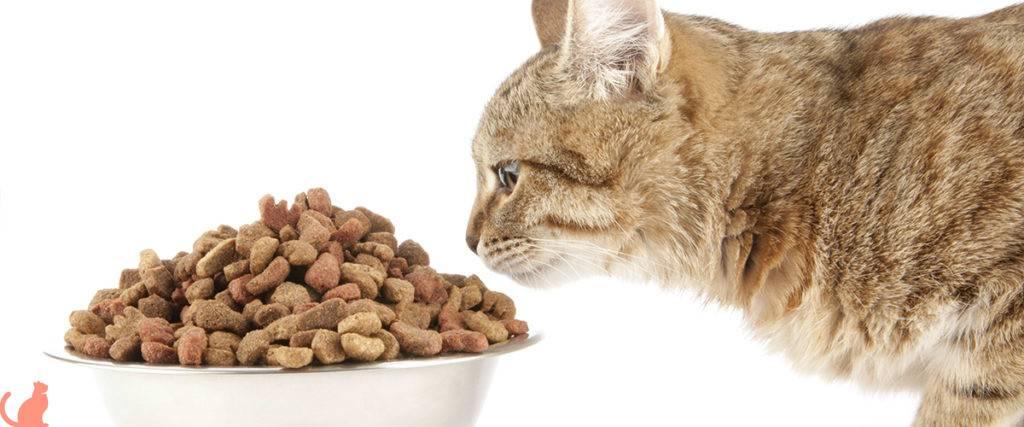 Кошка. содержание, уход, кормление; вакцинация; проблемы поведения – ветеринарные клиники ушихвост, полный спектр услуг для животных.