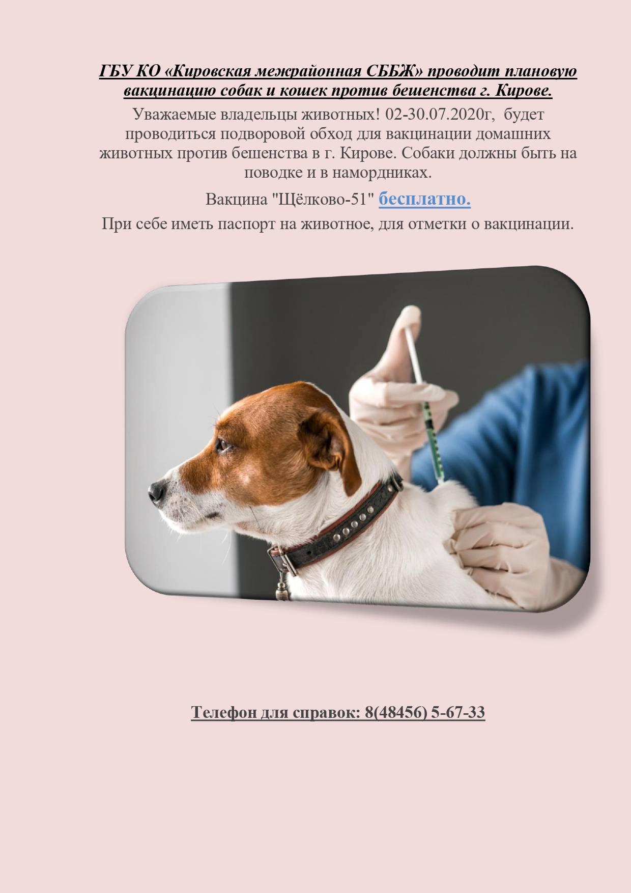 За сколько дней перед прививкой глистогонить собаку: дегельминтизация щенков и взрослых собак перед вакцинацией, применяемые препараты, для чего проводится процедура