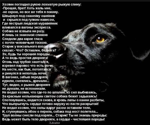 Почему собака лучший друг человека? настоящие причины — 4 лапки