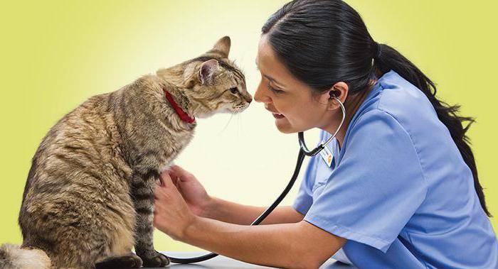 Немного о лейкемии у кошек