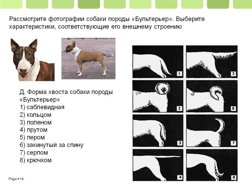 Собака дворняжка: особенности характера, здоровье и уход - purina.ru
