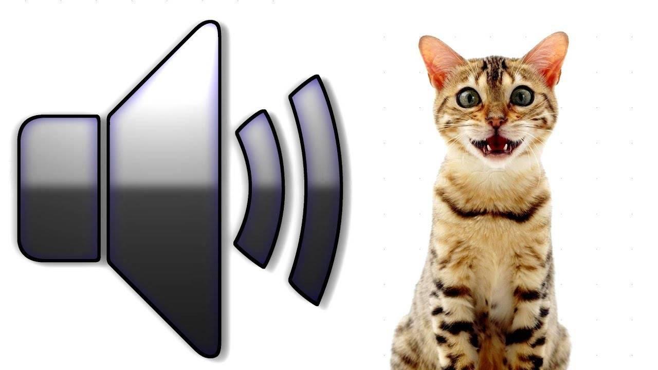 Знакомые нам животные, которые издают удивительные звуки