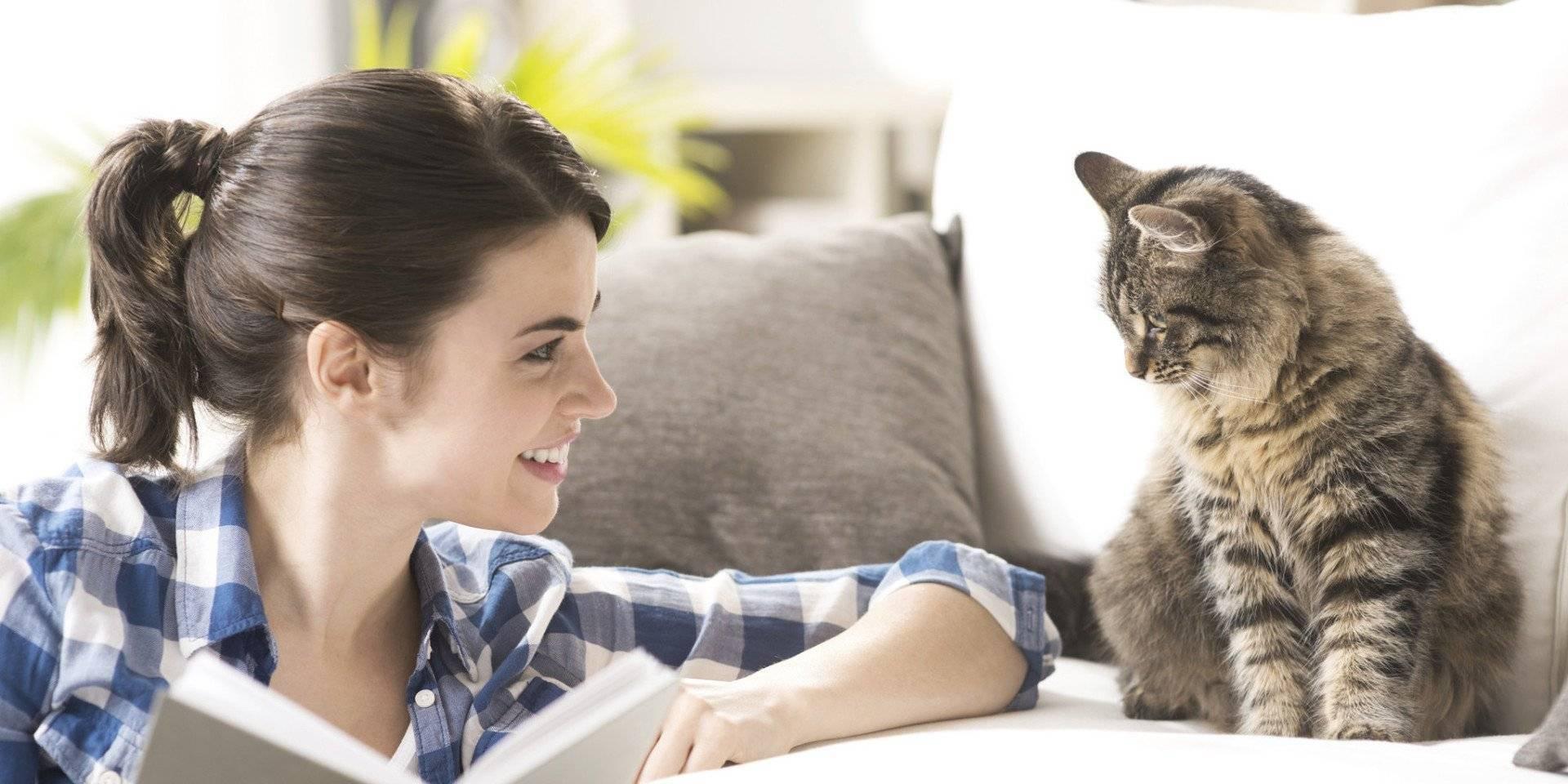 5 способов как поднять коту настроение