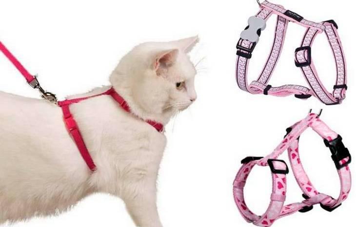 Как выбрать шлейку и поводок для котов и кошек