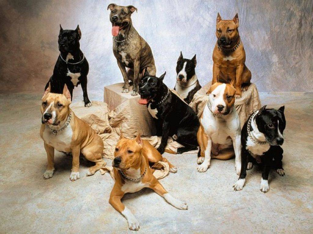 Как выбрать собаку правильно и какой породы - какую лучше для начинающих и как подобрать по характеристикам и себе по характеру и образу жизни - какая порода лучше для семьи и для частного дома -выбираем на лапы и хвост