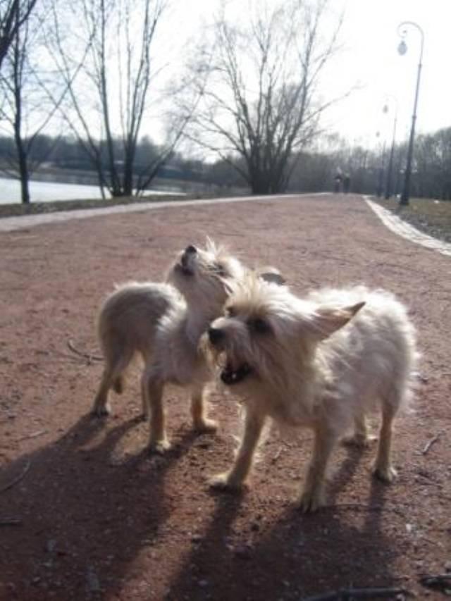 Служебные собаки. описание, особенности, дрессировка и породы служебных собак   живность.ру