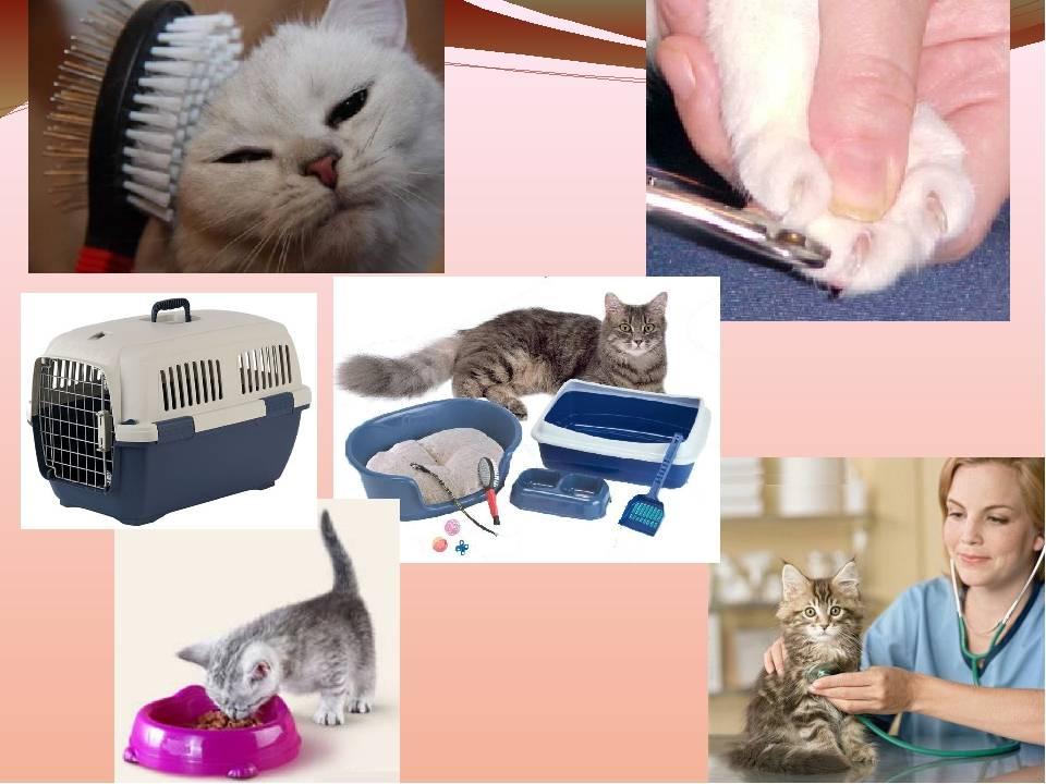 Как правильно ухаживать за котом в домашних условиях - инструкция