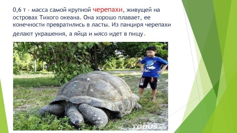 Возраст, рост и продолжительность жизни черепах - все о черепахах и для черепах