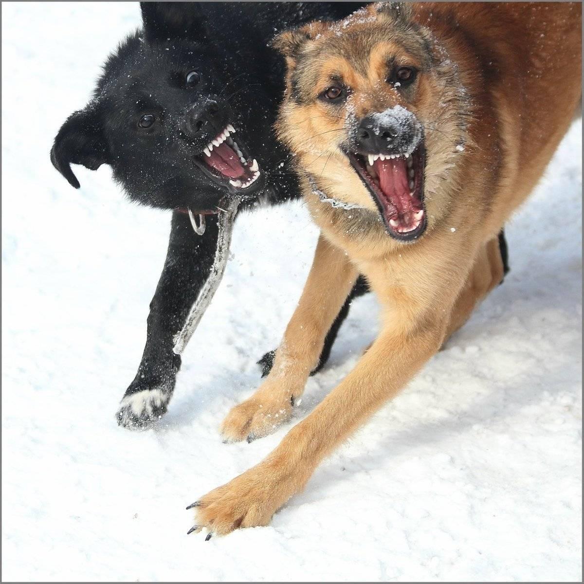Собака кусается: статья о том, как отучить питомца от агрессии