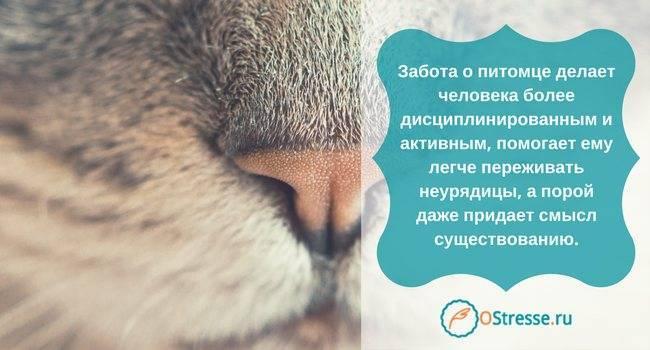 Как пережить смерть кота, смириться с утратой и избавиться от чувства вины