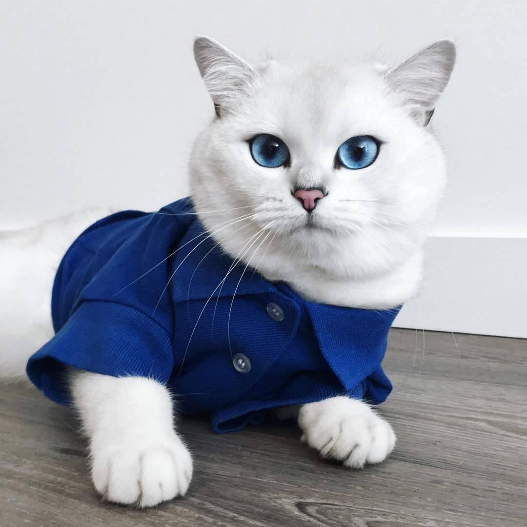 11 пород кошек с голубыми глазами