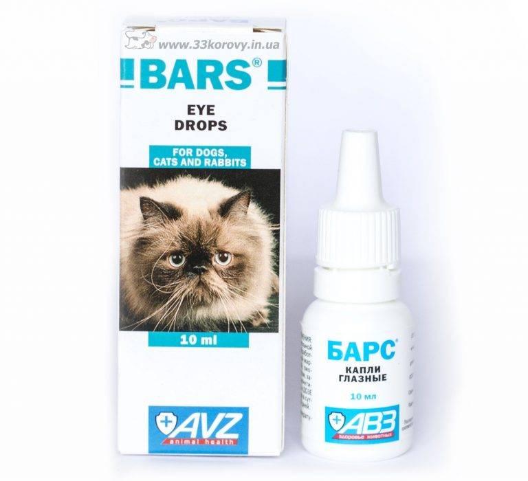 Глазные капли для котов. какие рекомендуют чаще всего?