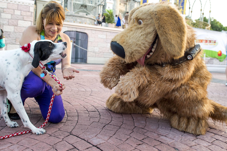 Всемирный день домашних животных - праздник 30 ноября